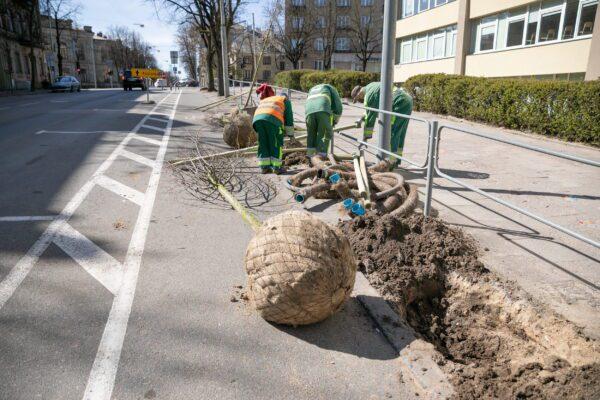 Sostinės Naugarduko gatvėje suplanuota daug želdinių ir kitų gerų permainų pėstiesiems